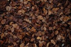 Herbsthintergrund von trockenen Blättern stockfoto