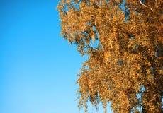 Herbsthintergrundbaum und -himmel Stockfotografie