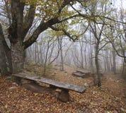 Herbstholz Lizenzfreie Stockbilder