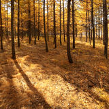 Herbstholz Lizenzfreies Stockfoto