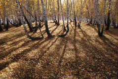 Herbstholz Lizenzfreie Stockfotos
