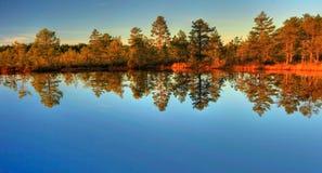 Herbstholz Lizenzfreies Stockbild