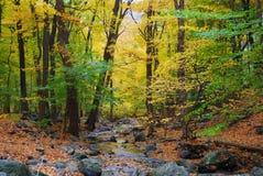 Herbstholz und -nebenfluß Lizenzfreie Stockfotografie
