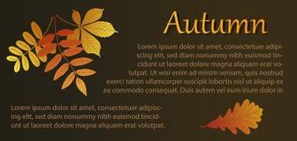Herbstillustration mit Blumenstrauß von Blättern und Eiche treiben Blätter Stockbilder