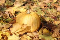 Herbstkürbis Lizenzfreies Stockfoto