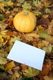 Herbstkürbis Stockfotos