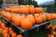 Herbstkürbise auf Anzeige Stockbild