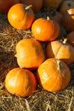 Herbstkürbise auf Stroh Lizenzfreie Stockfotos