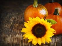 Herbstkürbise und -sonnenblume Stockfotografie