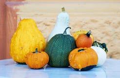 Herbstkürbise von verschiedenen Farben auf dem Tisch Stockbild