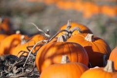 Herbstkürbisszene Lizenzfreies Stockbild