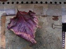Herbstkarte mit gefallenem Blatt lizenzfreie stockbilder