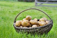 Herbstkartoffeln Stockfotos