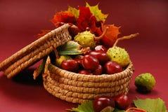 Herbstkastanien und -blätter Stockfoto