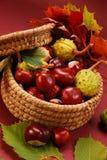 Herbstkastanien und -blätter Stockfotos