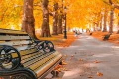 Herbstkonzept, Bänke auf einer Allee gezeichnet mit Bäumen in Green Park stockfotografie