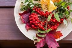 Herbstkonzept mit Ebereschenbeere über Holztisch Glücklicher Danksagungsdekor Rustikale hölzerne Tabelle Fallhintergrund mit lizenzfreie stockfotos