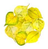 Herbstkreishintergrund mit gelbem Herbstlaub Lizenzfreie Abbildung