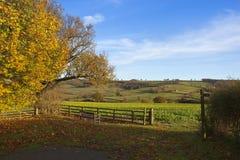 Herbstlandgehen Stockbild