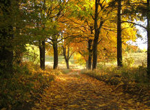 Herbstlandschaft stockbild