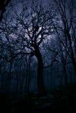 Herbstlandschaft, Bäume im Nebel an der Dämmerung Lizenzfreie Stockbilder