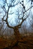 Herbstlandschaft, Bäume im Nebel an der Dämmerung Stockbild