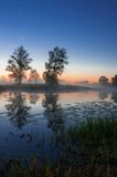 Herbstlandschaft, Bäume im Nebel an der Dämmerung Stockfotos