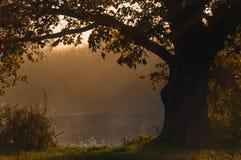 Herbstlandschaft, Bäume im Nebel an der Dämmerung Stockfoto