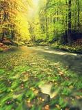 Herbstlandschaft, bunte Blätter auf Bäumen, Morgen in Fluss nach regnerischer Nacht Bunte Blätter Stockfotografie