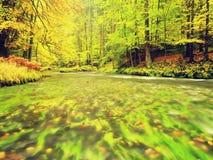 Herbstlandschaft, bunte Blätter auf Bäumen, Morgen in Fluss nach regnerischer Nacht Bunte Blätter Stockfoto