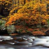 Herbstlandschaft, bunte Bl?tter auf B?umen, Morgen in Fluss Autumn Stream Ein nebelhafter Morgen nahe einem malerischen Fluss, De stockbild