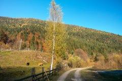 Herbstlandschaft in der Landschaft Stockbild