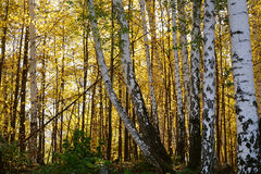 Herbstlandschaft der Süd-Urals Stockbilder