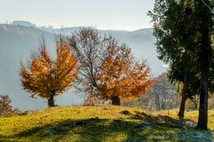 Herbstlandschaft, ein Baum mit Orange verlässt im Vordergrund, t Stockfotos