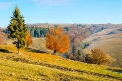 Herbstlandschaft, ein Baum mit Orange verlässt im Vordergrund, t Lizenzfreie Stockfotografie
