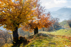 Herbstlandschaft, ein Baum mit Orange verlässt im Vordergrund, t Stockbild