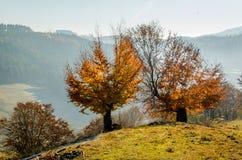 Herbstlandschaft, ein Baum mit Orange verlässt im Vordergrund, t Lizenzfreies Stockfoto