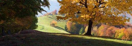 Herbstlandschaft in einem Bergdorf mit einem schönen Baum Stockfotos