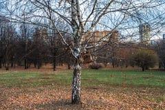 Herbstlandschaft an einem bewölkten Abend ist von der Melancholie voll Einsame Bäume mit verwelkendem Laub unter den trostlosen A stockfotos
