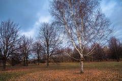 Herbstlandschaft an einem bewölkten Abend ist von der Melancholie voll Einsame Bäume mit verwelkendem Laub unter den trostlosen A lizenzfreies stockbild
