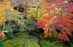 Herbstlandschaft eines schönen japanischen Gartens   Vogelperspektive von bunten Ahornbäumen im Garten eines berühmten buddhistis stockfotos