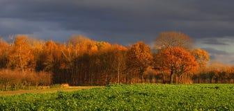 Herbstlandschaft einiger netter farbiger Bäume mit GR Lizenzfreie Stockfotos
