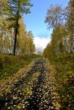 Herbstlandschaft, fallende Blätter, Waldweg Stockfotos