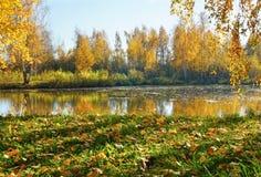 Herbstlandschaft, Fluss und goldener Fall lizenzfreies stockfoto