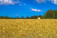 Herbstlandschaft. Gelbes Feld und blauer Himmel Stockbild