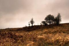 Herbstlandschaft im neuen Wald lizenzfreie stockbilder