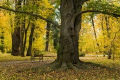 Herbstlandschaft im Park Stockbild