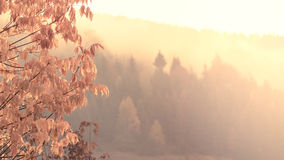 Herbstlandschaft im Sonnenschein stockfotos
