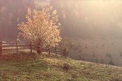 Herbstlandschaft im Sonnenschein stockbild