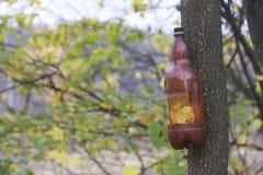 Herbstlandschaft im Stadtpark Auf dem Baum hängt eine selbst gemachte Vogelzufuhr, die von einer Plastikflasche gemacht wird Lizenzfreies Stockfoto